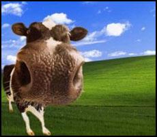 Political Economies Explained Using Cows
