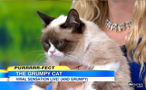 'Grumpy Cat' Exclusive Interview (VIDEO)