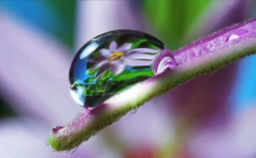 Louie Schwartzberg has 3 words: Nature Beauty Gratitude (VIDEO)