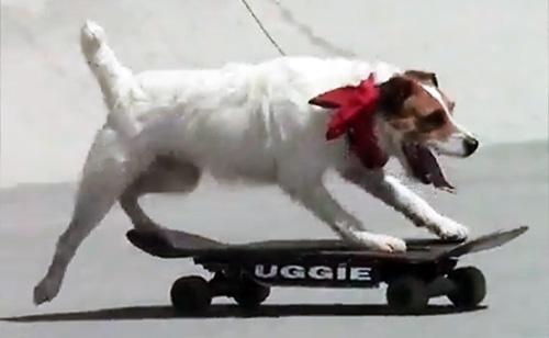 Bad Ass Stunt Dogs (VIDEOS)