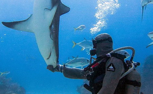 Shark Whisperer Hypnotizes Deadly Shark with a Gentle Nose Rub (VIDEO)
