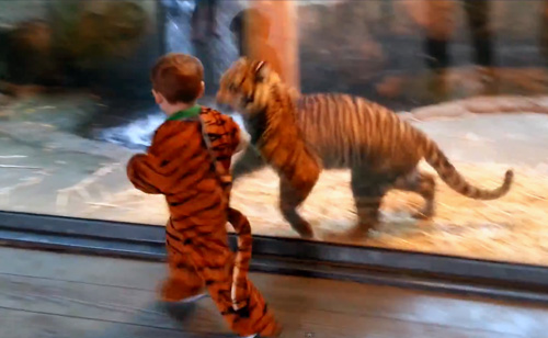 Two-Year-Old's Tiger Costume Fools Real Tiger Cub (VIDEO)