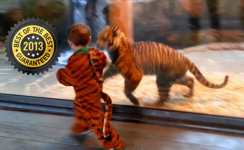 The 6 Best Animal Videos Of 2013