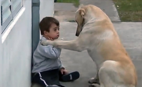 Watch This Dog Befriend A Boy With Down Syndrome