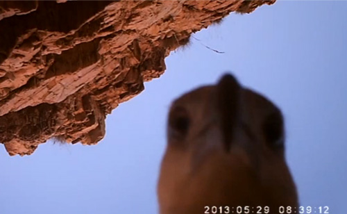 Watch Sea Eagle Steal Camera And Record Its Flight