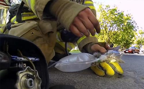 Helmet-Cam Captures Firefighter Bringing A Kitten Back To Life