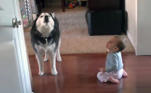 Husky Sings With Baby – Adorable!