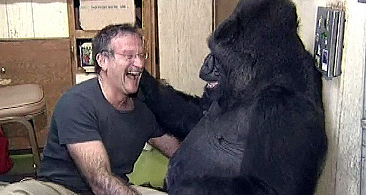 In Memoriam: Robin Williams & Koko The Gorilla Have A Tickle Fight – Video