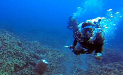 Caught On Camera: Scuba Diver Attacks Environmentalist (VIDEO)