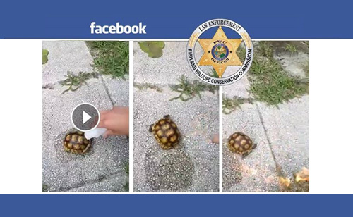 2 Florida Teens Arrested For Torturing Rare Tortoise