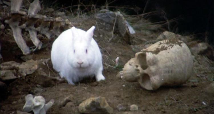 DEA Agent Predicts Dope-Crazed Rabbits If Utah Passes Marijuana Bill