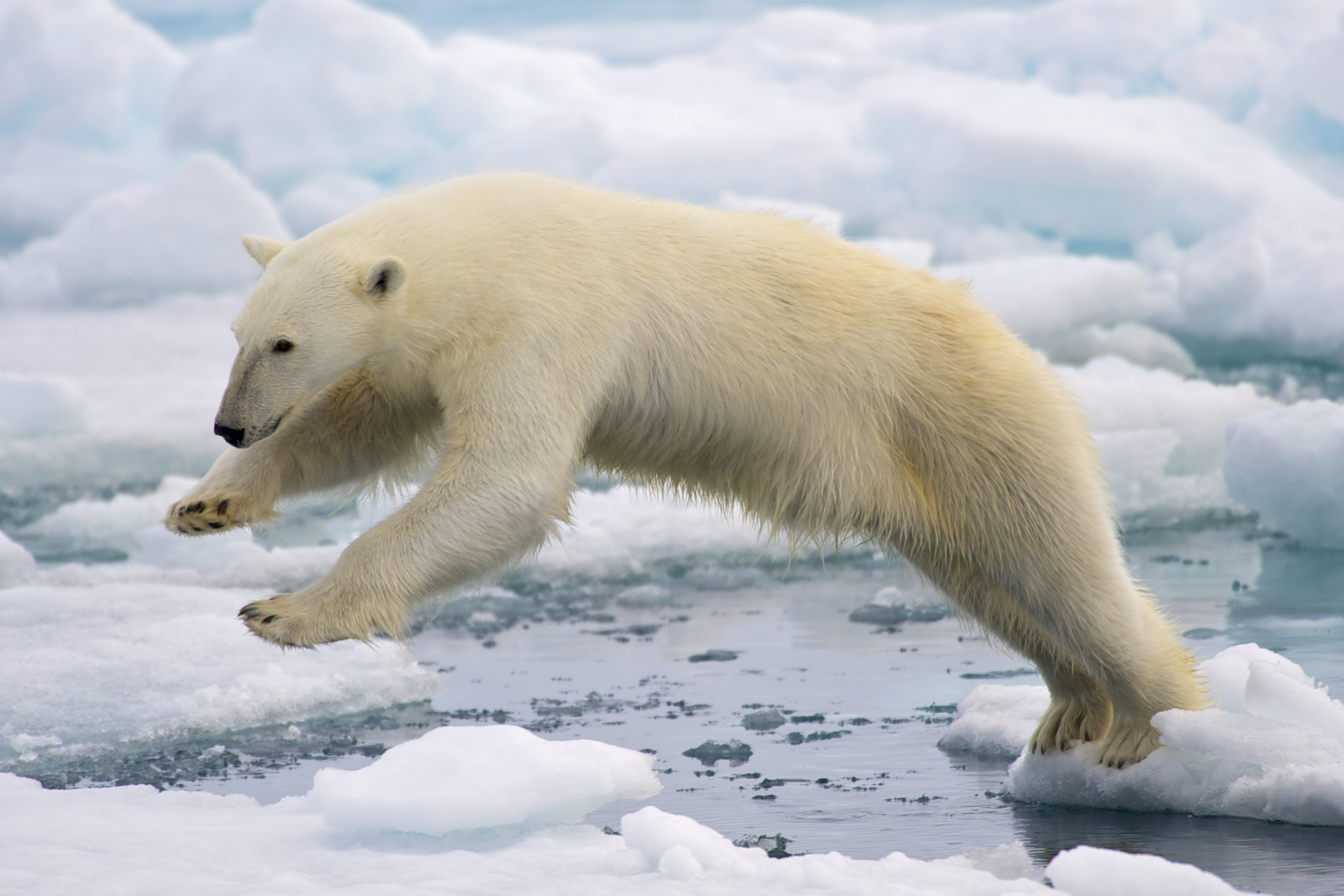 If There's No Climate Change, Why Are These Scientists Being Held Captive By Polar Bears?