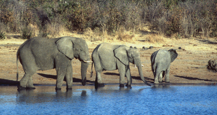 Congress Goes After Wildlife Traffickers