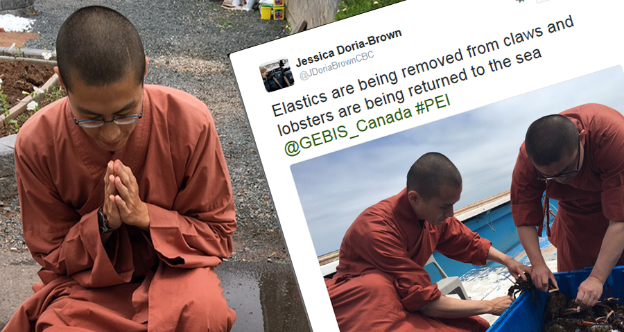 Thousands Of Dollars Of Karma As Buddhist Monks Buy 8 Crates Of Lobsters And Set Them Free