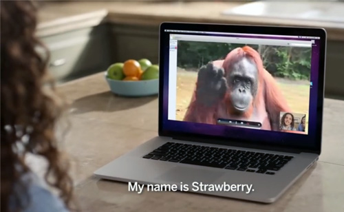 AMAZING! Orangutan Asks Girl For Help in Sign Language (VIDEO)