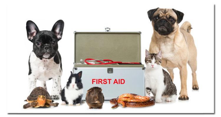 pet-rescue-bill